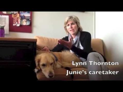 Junie: Prospect's Top Dog