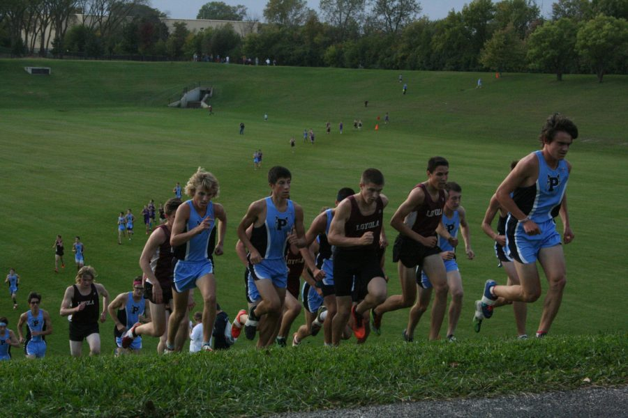 Cross country reaps success at conference