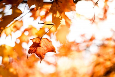 Prospector's Fall Favorites